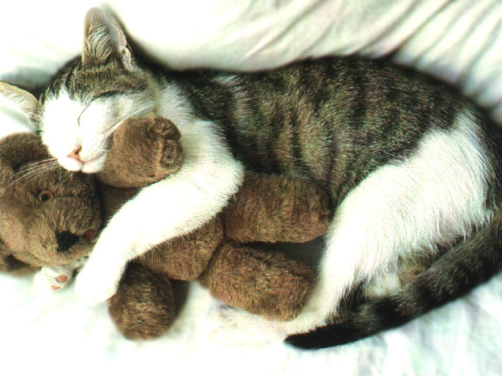 Chats et doudou